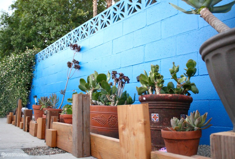 blue-wall-cactus