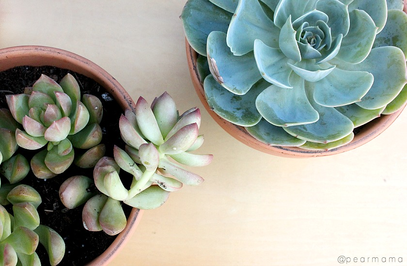 Paint your own terracotta pots to show off your succulent garden.