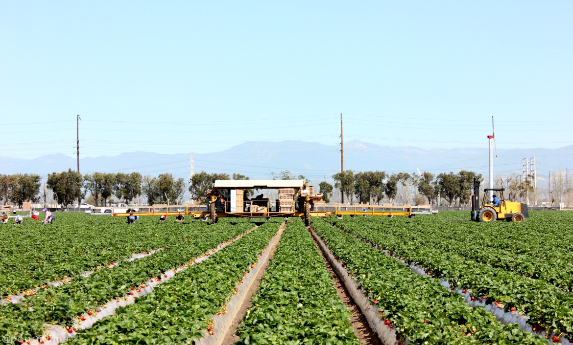 mandalay-berry-farms-oxnard
